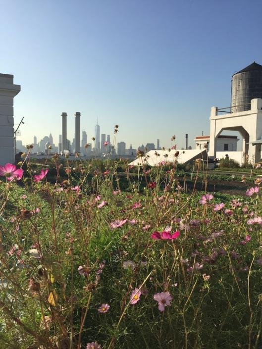 Brooklyn Grange Rooftop Farm At Brooklyn Navy Yard Small